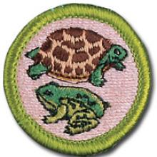 Reptile and Amphibian Study Badge Image